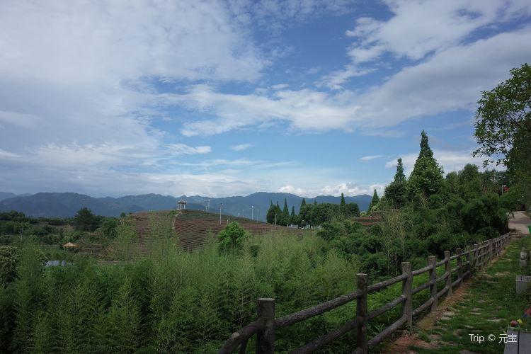 大木山茶園景區2
