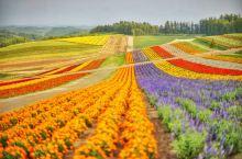 最美的花海在四季彩之丘