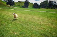 皇家农场与草泥马