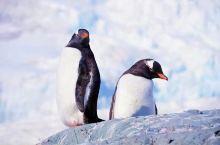 南极半岛,人间最后一片净土