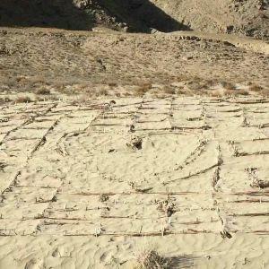 曲卓木乡千年沙棘林景区旅游景点攻略图