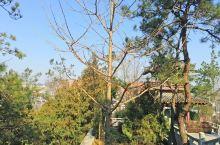 炎帝故里的树与家