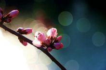 樱花🌸季节到来