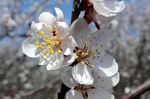 公路边的桃花