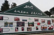 茶花大观园