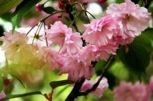 中山公园春色满园,百花争艳。