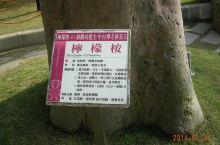 台湾阿里山森林树🌲种类的介绍