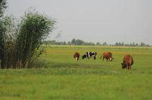 巴音杭盖草原