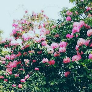 攀枝花花舞人间旅游景点攻略图