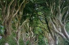 不暗的Dark hedges