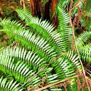 吊罗山国家森林公园旅游景点攻略图