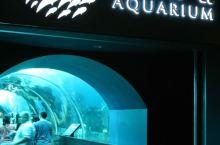 新加坡海洋館