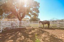 美国德克萨斯:孤星之州的多彩风情