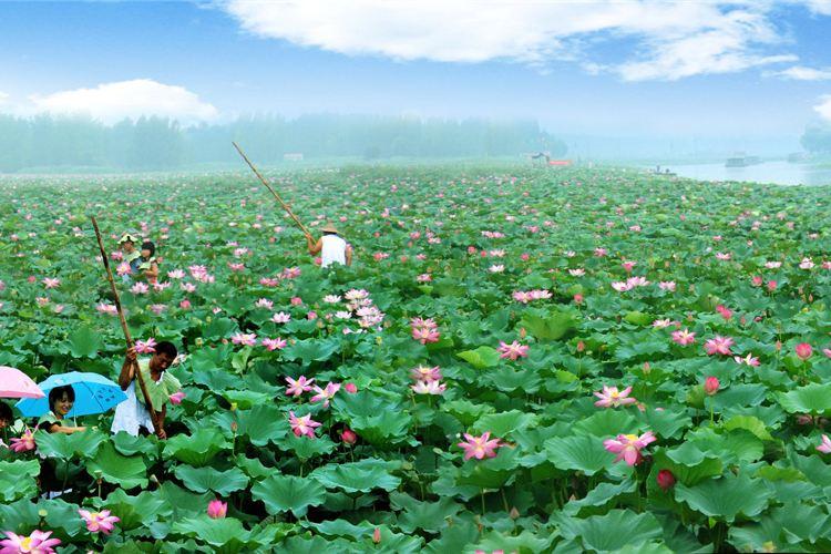 Weishan Lake National Wetland Scenic Area1
