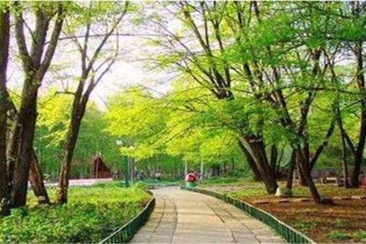 헤이룽장성 삼림식물원4