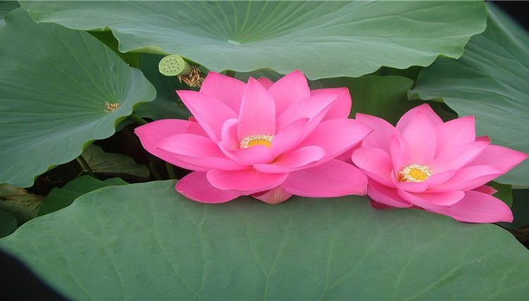 Yi Garden1