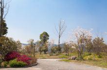 湘湖之春  杭州西湖的姐妹湖 带着孩子带上父母一起看花