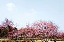 太仓生态园,阳光花遍野,还有钓鱼区和水果采摘区