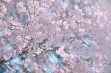 春日里的南国秘境,这一次去九州旅行吧!(鹿儿岛,樱岛,屋久岛,人吉,别府)