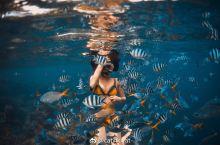 畅游Palau全记录,黑人鱼的沦陷之旅