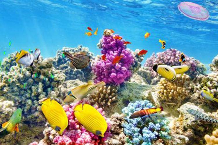 Haizhiyu Sea World2