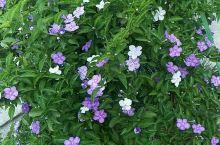 花🌸美景色美