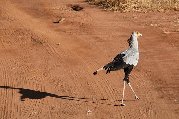 疯狂的小鸟100分_坦桑之旅(17)东非大草原,林子大了什么鸟都有 - 坦桑尼亚游记 ...