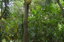 万宁兴隆热带植物园