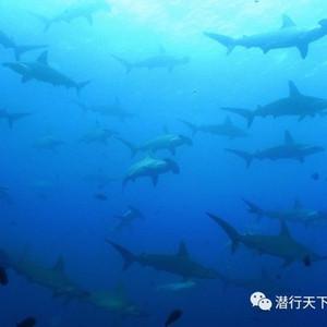 加拉帕戈斯游记图文-海陆空,加拉帕戈斯最有深度的资讯之《海洋生物篇》