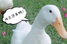 都说北京烤鸭是鸭行的扛把子,但这里的鸭子才是鸭届鼻祖!