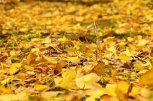 秋风扫落叶