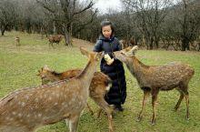 你们的小鹿在这里