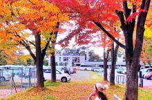 弘前城,不仅有春之粉樱,也有秋之红叶