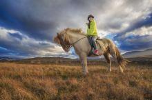 爱上一匹野马#向往的生活