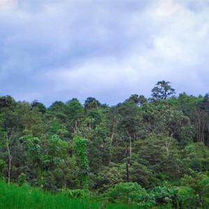 苏门答腊游记图文-不一样的旅行!朱丹《丹行线》走进苏门答腊原始森林,亲历野生懒猴生死救援!