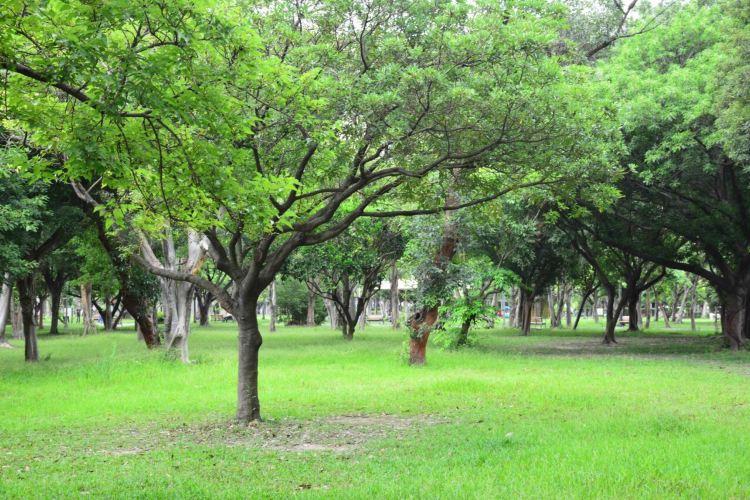 다안공원4