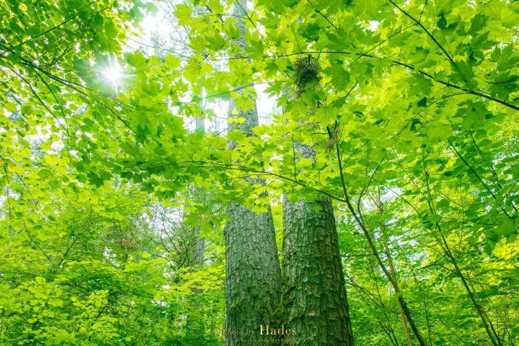 五營國家森林公園4