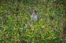 邂逅长鼻猴与漫天飞舞的萤火虫