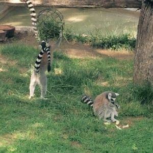 毕欧帕可野生动物园旅游景点攻略图