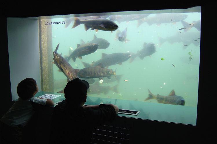 Chitose Salmon Aquarium3