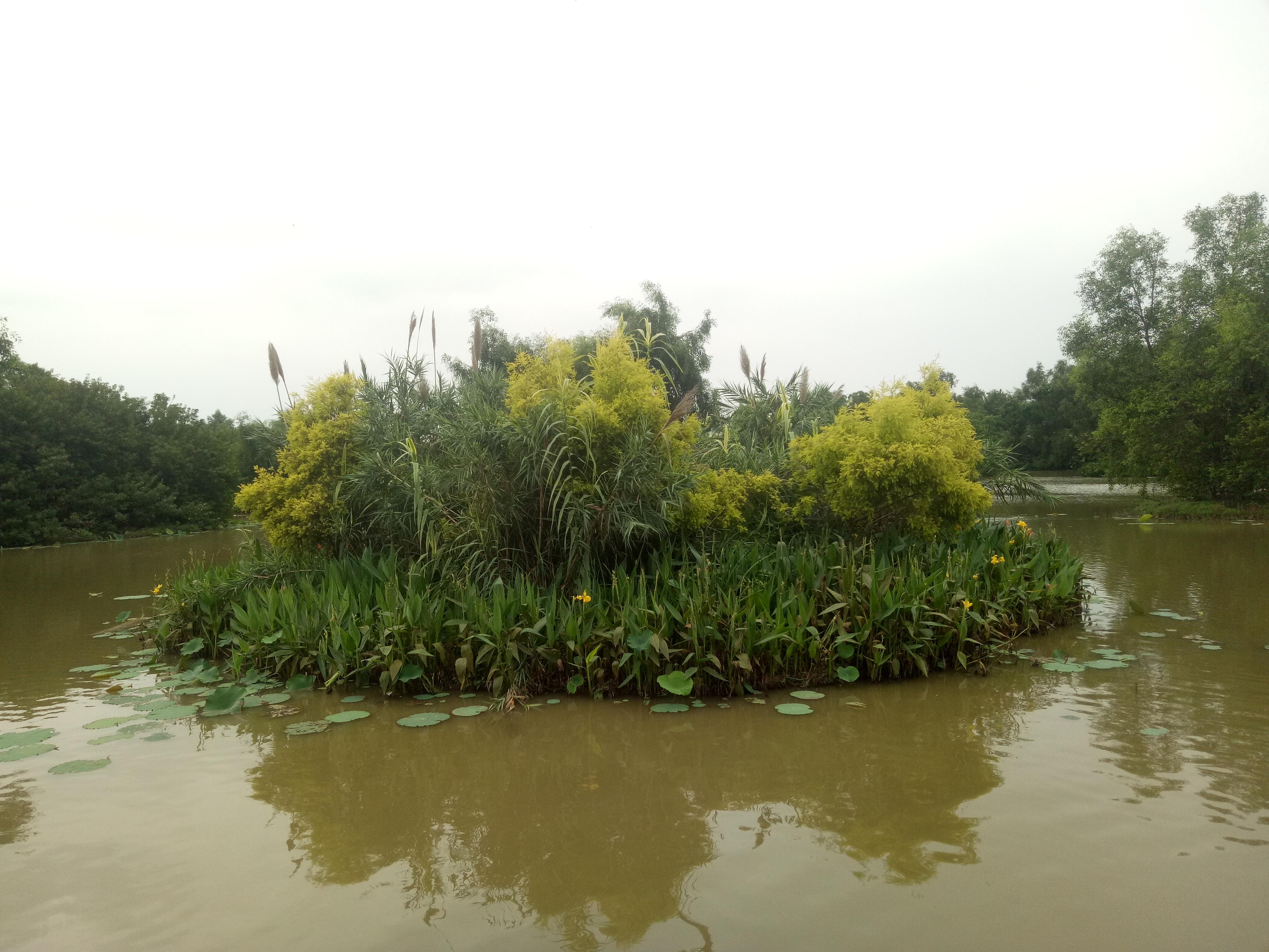 广州去南沙湿地公园_2019南沙湿地-旅游攻略-门票-地址-问答-游记点评,广州旅游旅游 ...