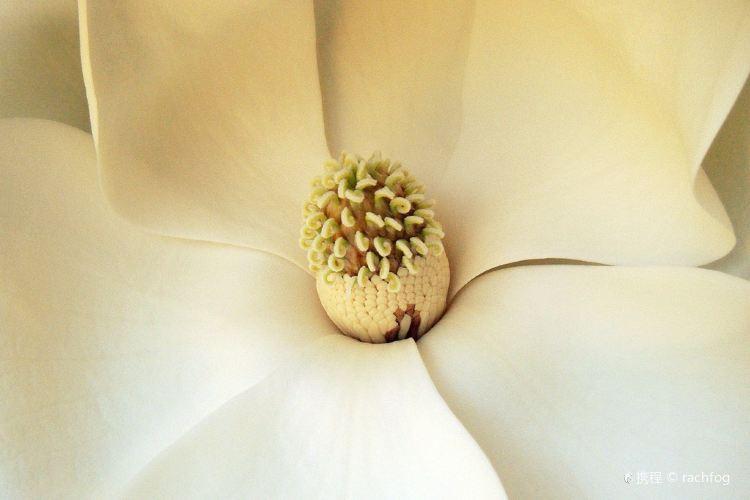 Magnolias, The2