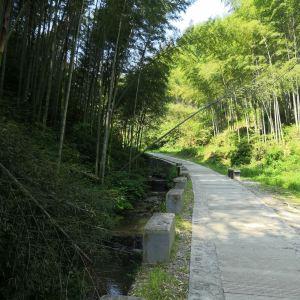 木坑竹海旅游景点攻略图