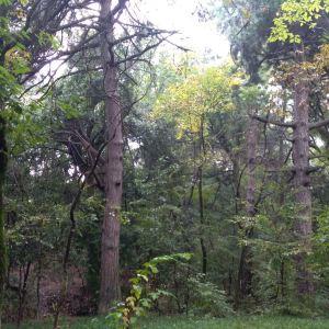 麦积山植物园旅游景点攻略图