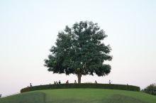 打卡清迈小众景点---拉查帕皇家花园