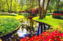 春天,在荷兰和郁金香来一场最美的约会吧!