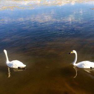 巴音布鲁克天鹅湖旅游景点攻略图