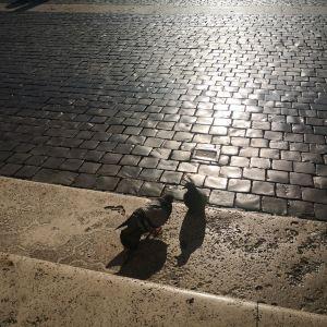 圣彼得广场旅游景点攻略图