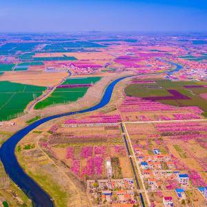 苏北花卉示范园旅游景点攻略图