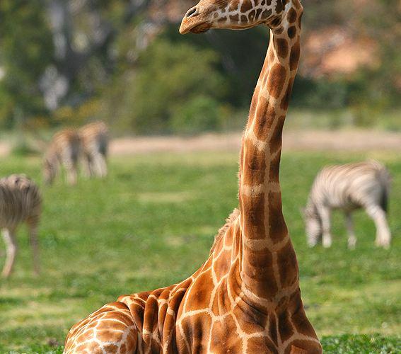 華勒比野生動物園4